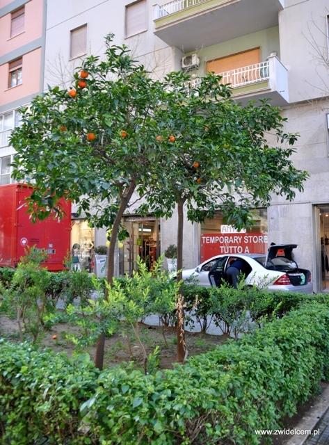 Palermo - pomarańcze na ulicy