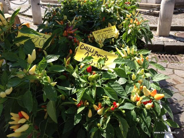 Morawy - Brno - Zelný trh - Papryczki chilli
