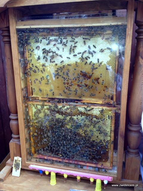 Kraków - Plac Wolnica - Małopolski Festiwal Smaku - pszczoły