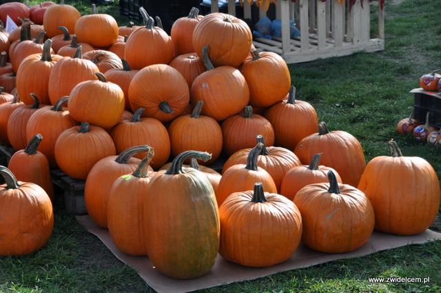 Najedzeni Fest Jesień - dynie