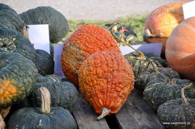 Najedzeni Fest Jesień - dynie pomarańczowe i zielone