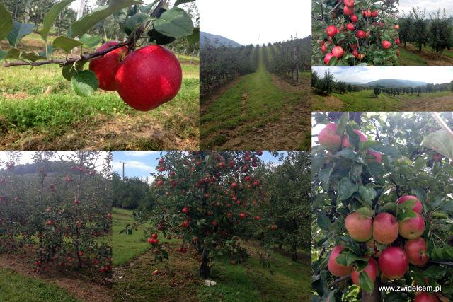 Trzy znaki Smaku - Zabrzeż - Łącko - sady owocowe