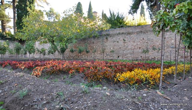 Hiszpania - GRanada - Alhambra - pole papryczek