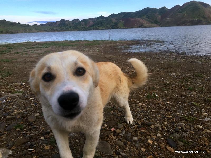 Gruzja - Jezioro koło Udabno - pies